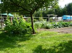 Apple tree and green beans