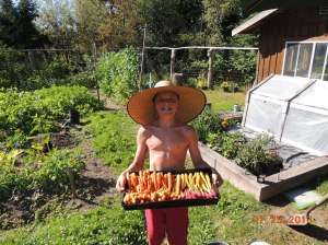 Kyler's carrot harvest 2013